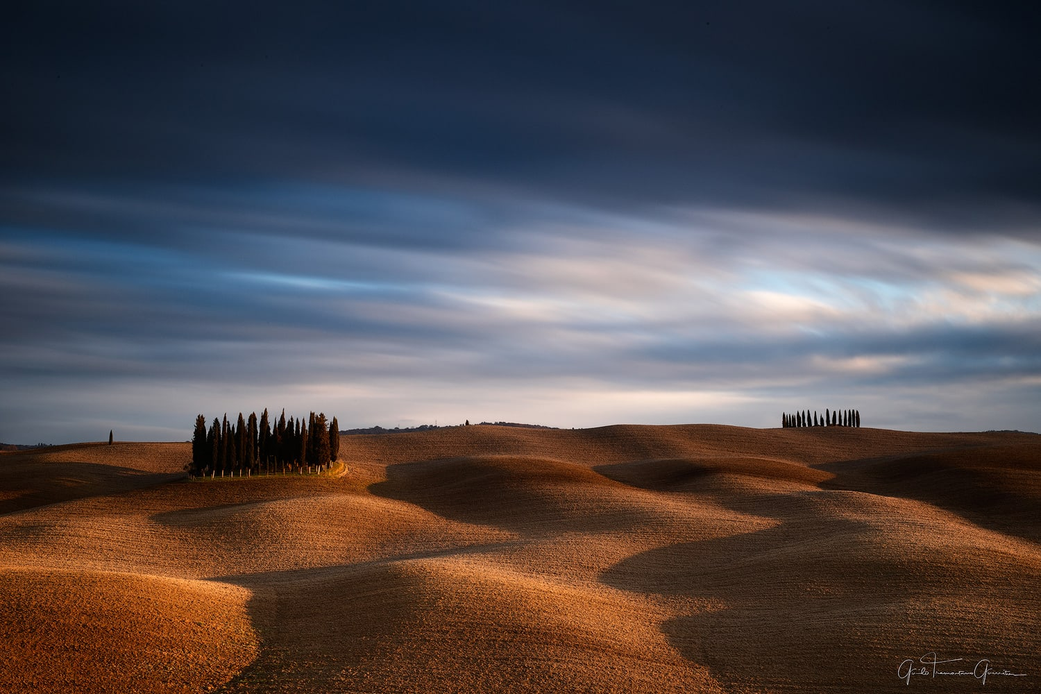 cypress groove in tuscany